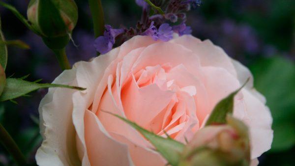 Bloemen fleuren op